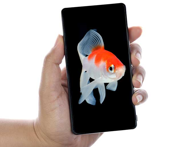 Goldfish picture on iPhone